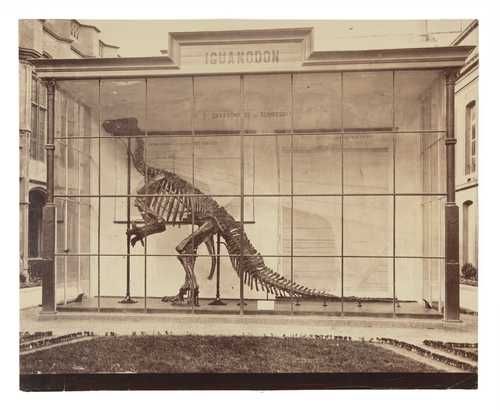 E. Ghilain-Attenelle, Skeleton of an Iguanodon in Brussels, albumen print, 1883–1890© as a collection by Jacques Herzog und Pierre de Meuron Kabinett, Basel.